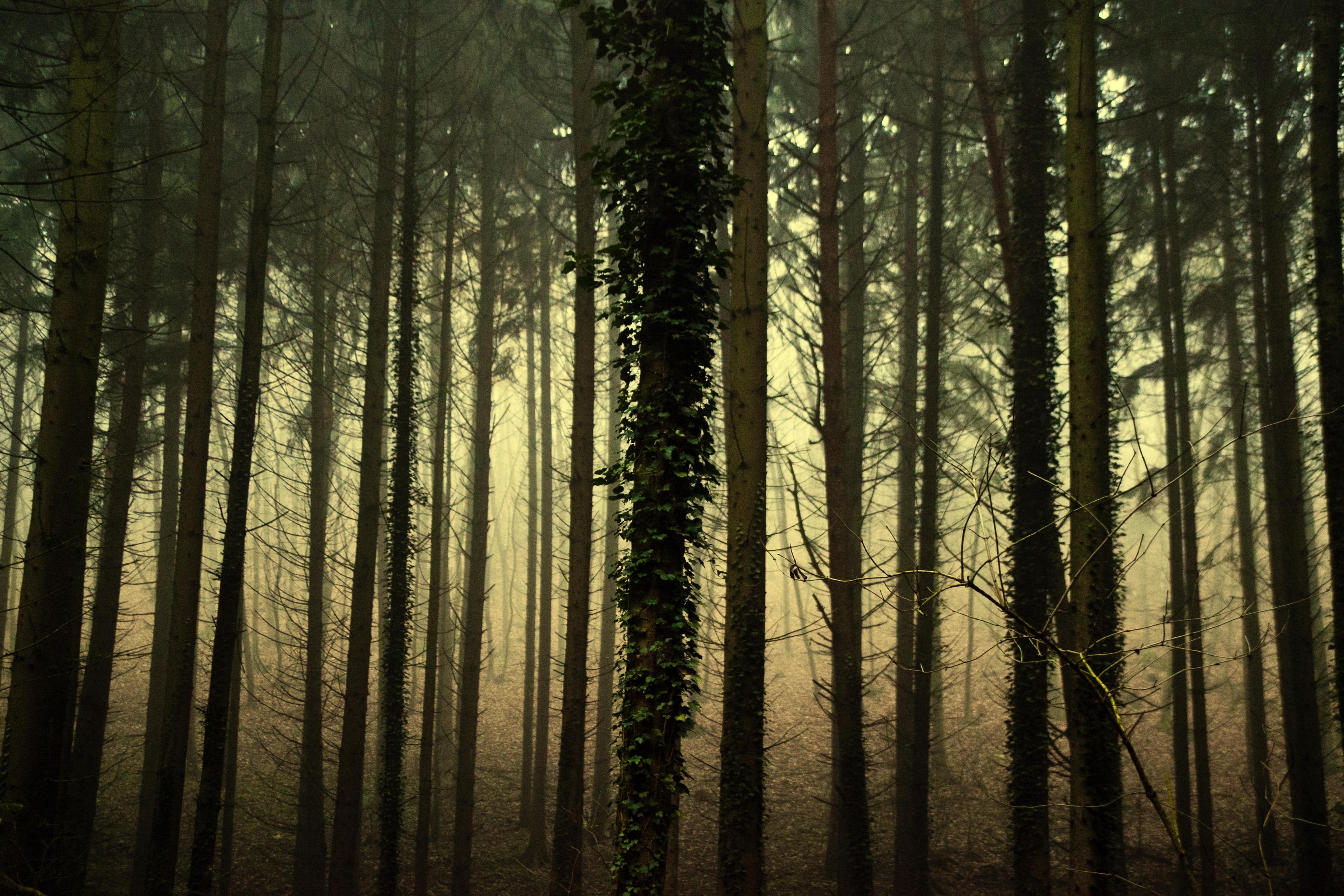Bäume im Gegenlicht abb50