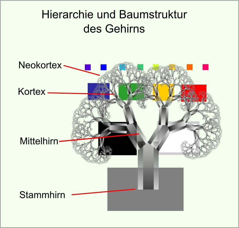 Gehirnbaum hierarchie abb48