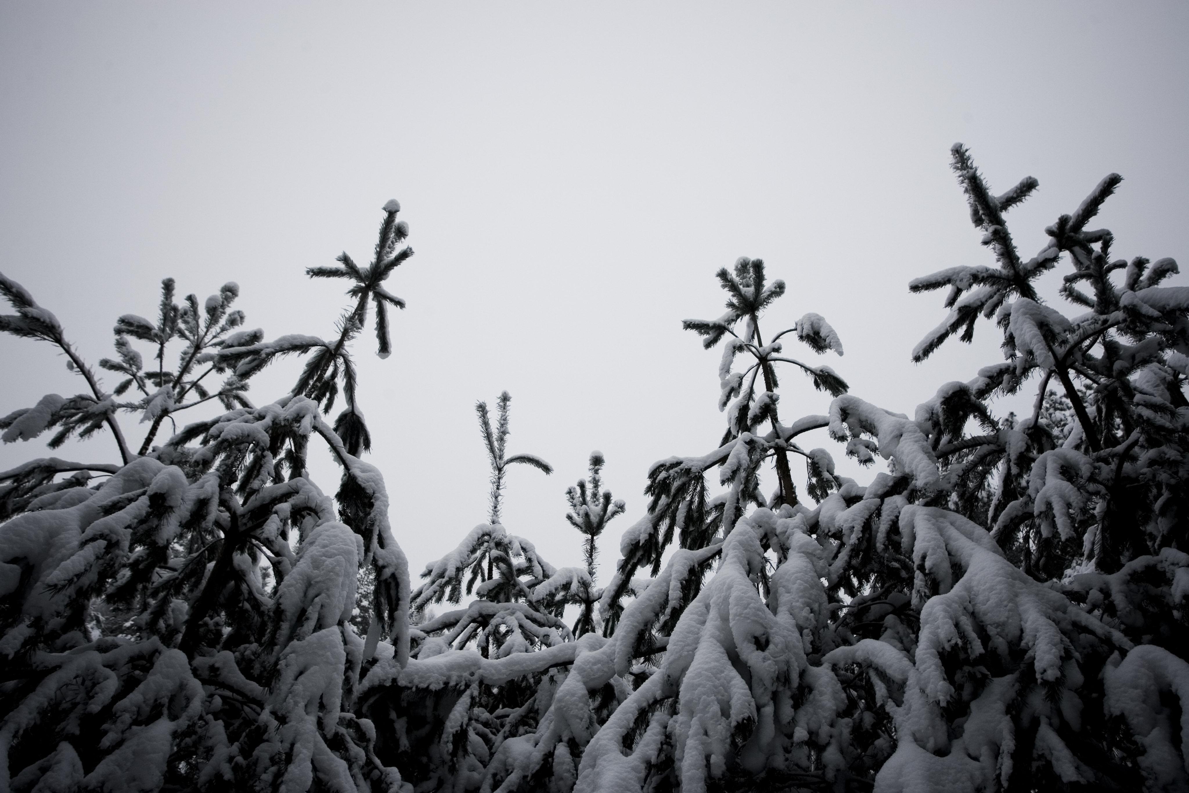 Winterbäume abb04